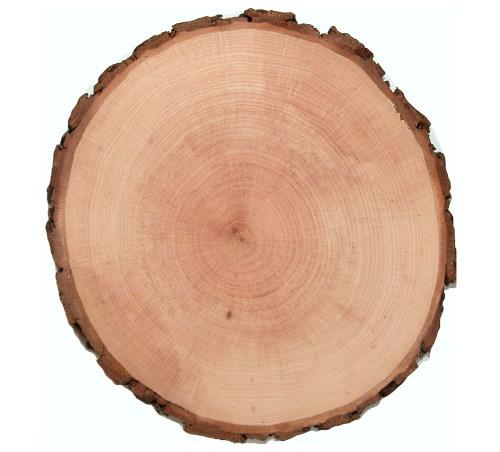 Baumscheibe Erle rund 12-14 cm - Holzscheiben mit Rinde
