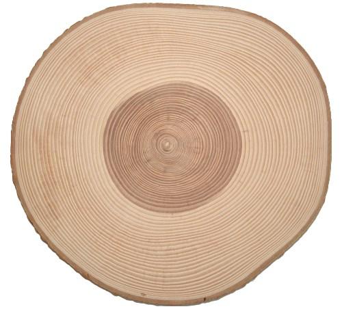 Baumscheibe Esche rund 31-35 cm - Holzscheiben mit Rinde