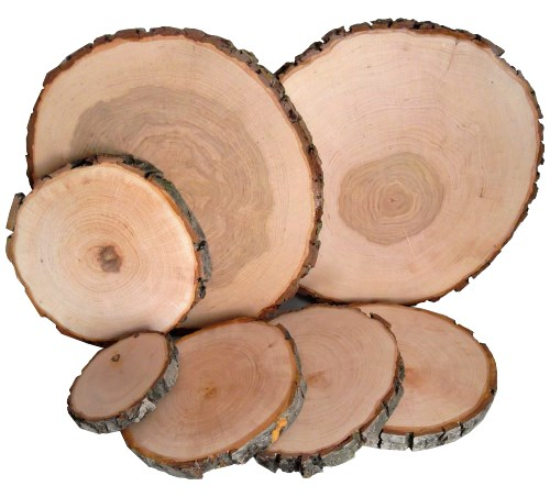 Baumscheibe Erle rund 23-26 cm - Holzscheiben mit Rinde